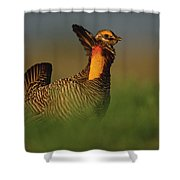 Greater Prairie Chicken Male Shower Curtain by Tim Fitzharris