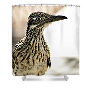 Greater Roadrunner  Shower Curtain