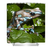 Green And Black Poison Frog Shower Curtain