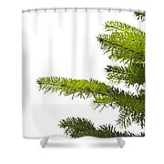 Green Branches Of A Christmas Tree Shower Curtain