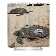 Green Sea Turtles With Gps Shower Curtain