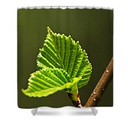 Green Spring Leaves Shower Curtain by Elena Elisseeva