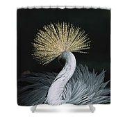 Grey Crowned Crane Balearica Regulorum Shower Curtain