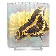 Grunge Giant Swallowtail Shower Curtain