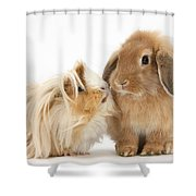 Guinea Pig And Rabbit Shower Curtain