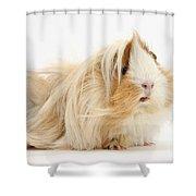 Guinea Pig Shower Curtain
