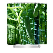 Hanging Cucumbers Shower Curtain
