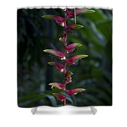 Hanging Gardens Shower Curtain