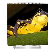 Harlequin Frog Shower Curtain