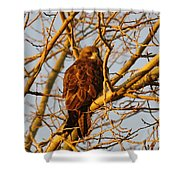 Hawk In A Tree Shower Curtain