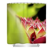 Hen And Chicks Shower Curtain