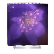Hepatica Shower Curtain