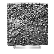Hepatitis Virus Shower Curtain