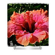 Hibiscus Blossom Shower Curtain