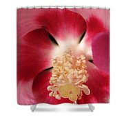 Hibiscus Moscheutos Named Luna Pink Swirl Shower Curtain