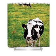 Holstein Dairy Cattle Shower Curtain