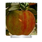 Honey Crisp Shower Curtain