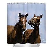 Horse Foul Play Iv Shower Curtain