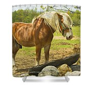 Horse Near Strone Wall In Field Spring Maine Shower Curtain