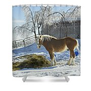 Horse On Maine Farm After Snow And Ice Storm Shower Curtain