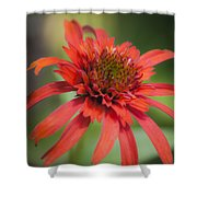 Hot Papaya Coneflower Squared Shower Curtain