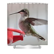 Hummingbird With Wings Back Shower Curtain