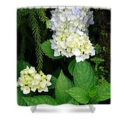 Hydrangea Blooming Shower Curtain