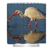 Ibis With Shrimp Shower Curtain