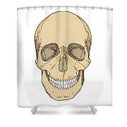 Illustration Of Anterior Skull Shower Curtain
