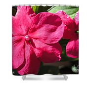 Impatiens Named Dazzler Burgundy Shower Curtain