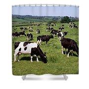 Ireland Friesian Cattle Shower Curtain