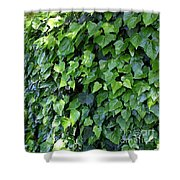 Ivy Wall Shower Curtain