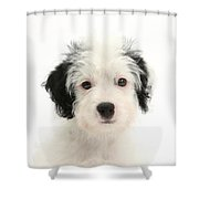 Jack-a-poo Puppy Shower Curtain