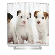Jack Russell Puppies Shower Curtain