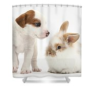 Jack Russell Terrier Puppy And Baby Shower Curtain