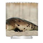 Juvenile Harp Seal Basking In The Sun Shower Curtain