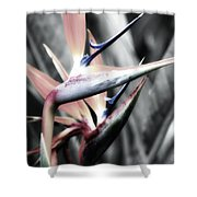 Kauai Paradise Shower Curtain