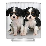 King Charles Spaniel Puppies Shower Curtain by Jane Burton