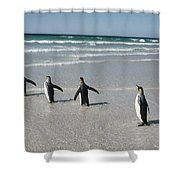 King Penguin Aptenodytes Patagonicus Shower Curtain