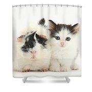 Kitten And Guinea Pig Shower Curtain