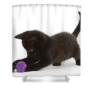 Kitten Shower Curtain