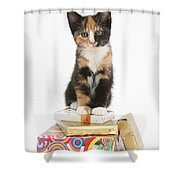 Kitten On Packages Shower Curtain