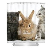 Kittens And Rabbit Shower Curtain