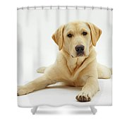 Labrador X Golden Retriever Puppy Shower Curtain by Jane Burton