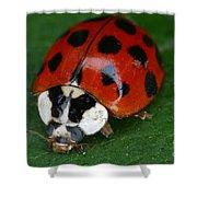 Ladybird Beetle Shower Curtain