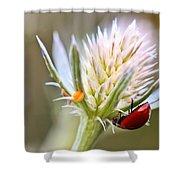 Ladybug On Thistle Shower Curtain