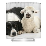 Lamb And Border Collie Shower Curtain