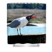 Laughing Gull Shower Curtain