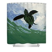Leatherback Sea Turtle Dermochelys Shower Curtain