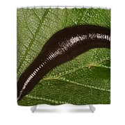 Leech Shower Curtain